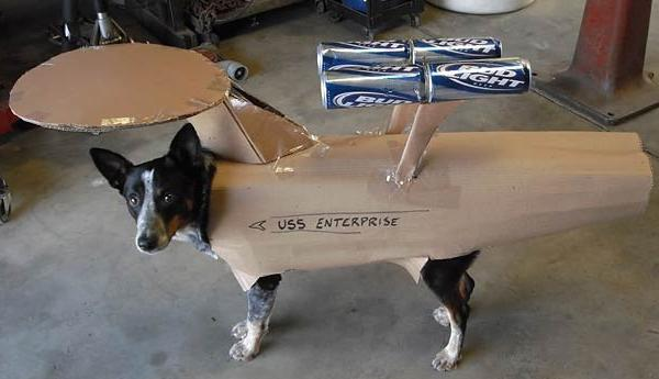 USS Enterprise Dog